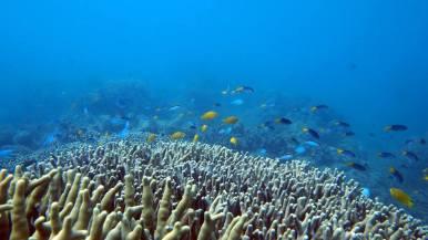 Maureens Cove Underwater